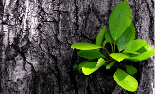 Broto numa árvore