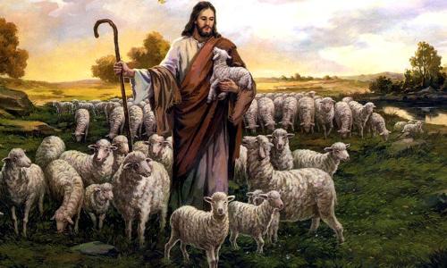 Pastor de ovelhas no campo